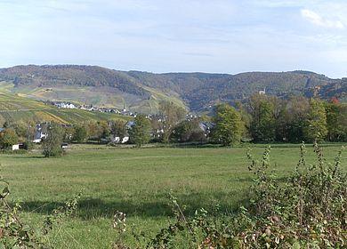 Eine grüne Wiese inmitten der Weinlandschaft um Bernkastel-Andel. Im Hintergrund ist der Moselhunsrück zu sehen.